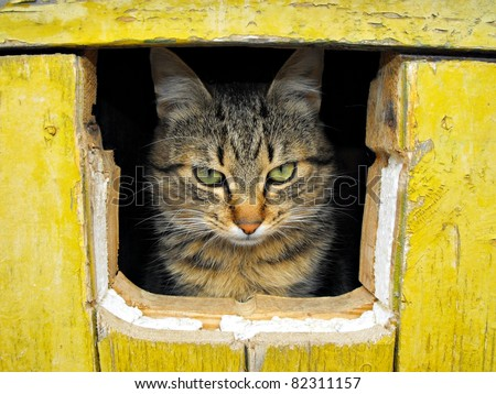 cat is looking from the hall in yellow planks - stock photo