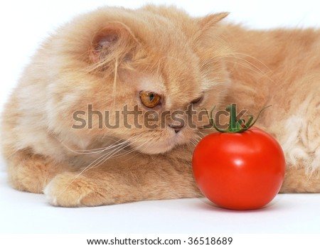Cat is smelling the tomato - stock photo