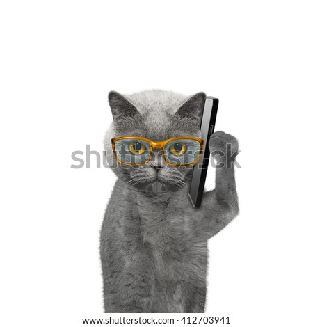 cat is talking over the mobile phone -- isolated on white - stock photo
