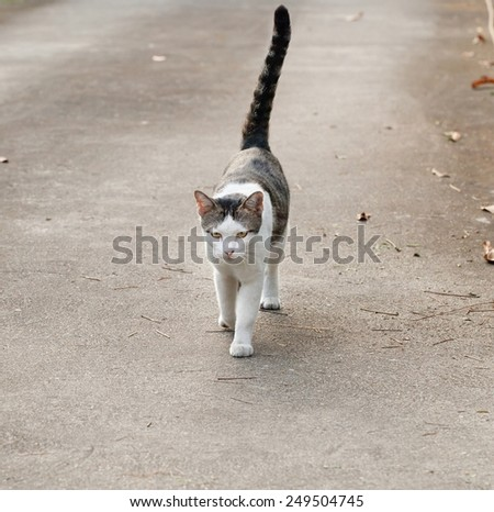 cat is walking - stock photo