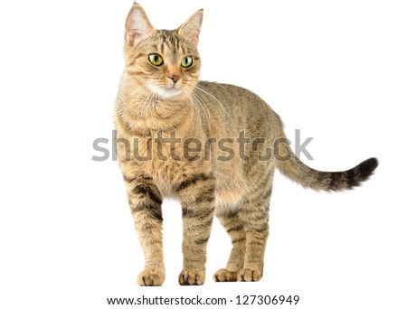 Cat isolate on white - stock photo