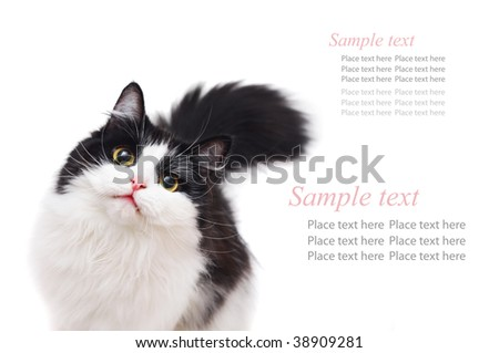 cat isolated - stock photo