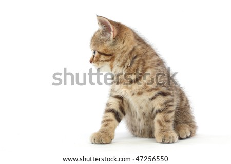 cat isolated