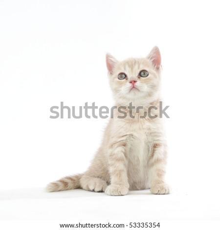 cat isolated - stock photo