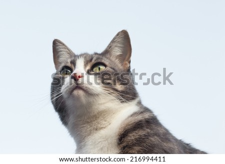 Cat isolated against a blue sky - stock photo