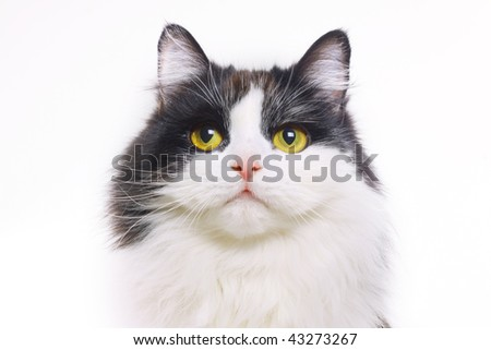 cat isolated on a white - stock photo