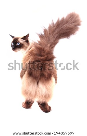 cat isolated on the white background