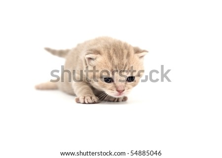 cat isolated on white - stock photo