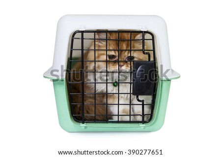 cat it sadly when staying in a cage  - stock photo