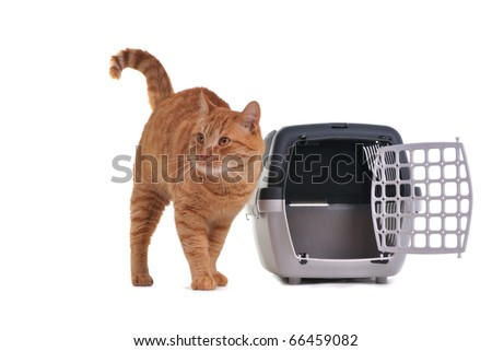 Cat just out of transportation cage - stock photo