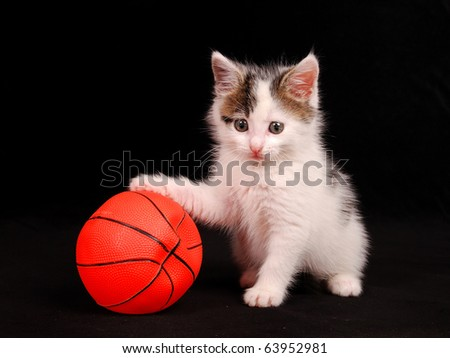 cat keeps a basketball ball