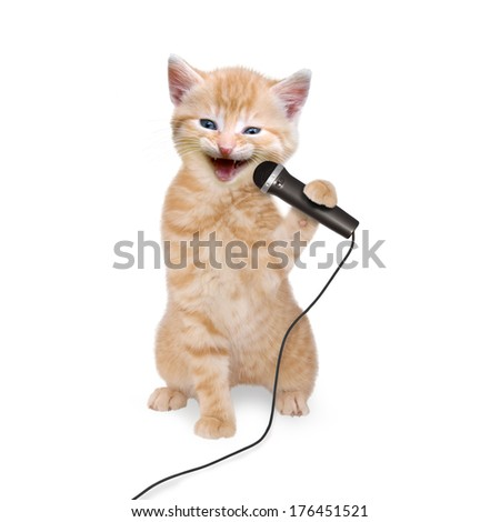 Cat kitten singing into microphone on white background - stock photo