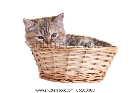 cat kitten white little nice pet - stock photo