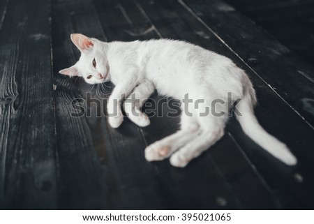 cat kitty little soft white background relax