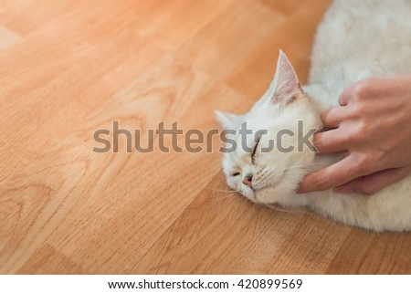 Cat lay down on wood floor and hand scratching a cat's chin - stock photo