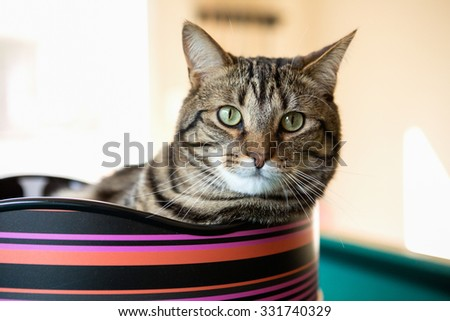 Cat laying in a cat bed - stock photo