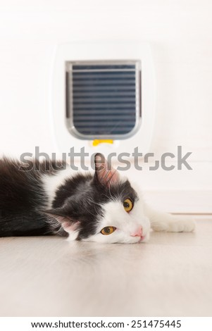 Cat laying in front of the cat doors at home - stock photo