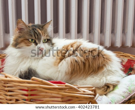 Cat laying in the basket with radiator background - stock photo