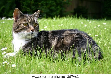 Cat laying in the grass - stock photo