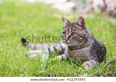 Cat laying in the grass