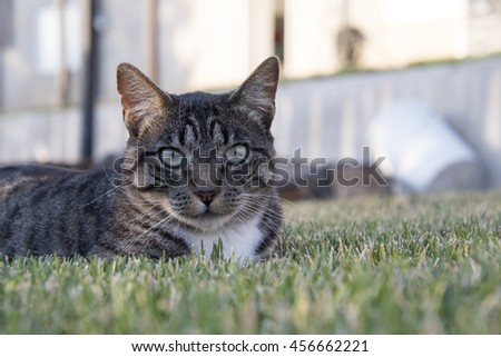Cat laying in the lawn - stock photo