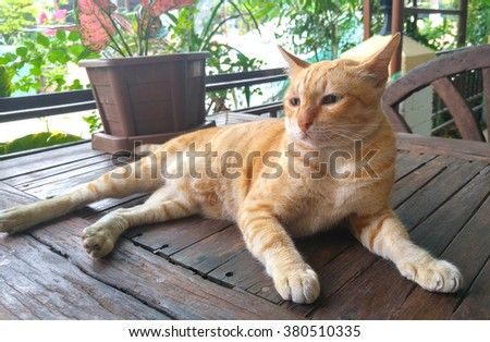 Cat  laying on wood table - stock photo