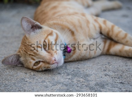 Cat lays down on the concrete floor