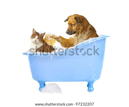 Cat-lick, dog and cat in a bathtub - stock photo
