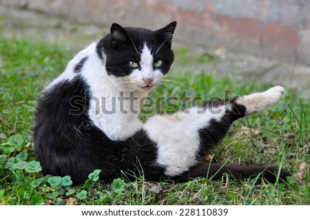 cat licking its fur in the grass, cleaning, washing - stock photo