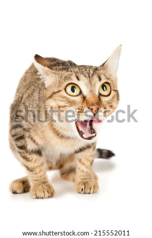 Cat licks her lips looking up - stock photo