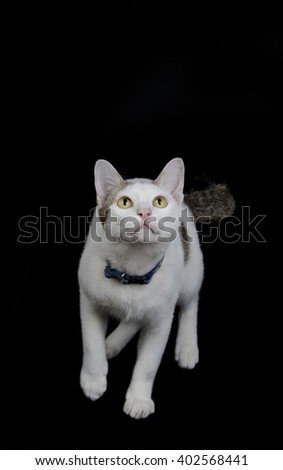 Cat look and ready to jump isolated