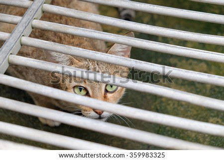 Cat look from under dish drainer