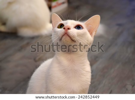 Cat Looking - stock photo