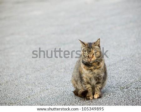 Cat Looking At Camera - stock photo