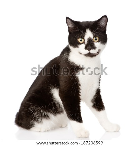 cat looking at camera. isolated on white background - stock photo