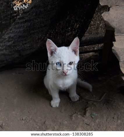 Cat looking at the camera - stock photo