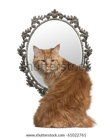 Cat looking back with a mirror in background in front of white background - stock photo