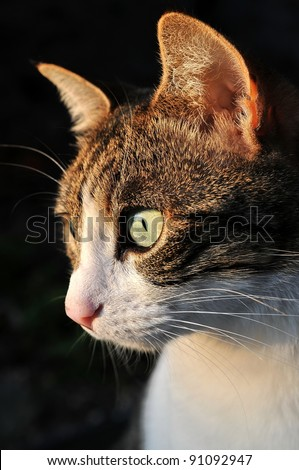 Cat looking curious - stock photo