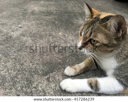 Cat looking for asean
