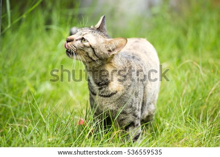 Cat looking for prey in the meadow.