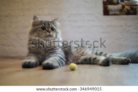 Cat looking for something interesting - stock photo