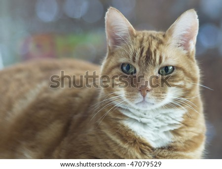 Cat looking in camera - stock photo