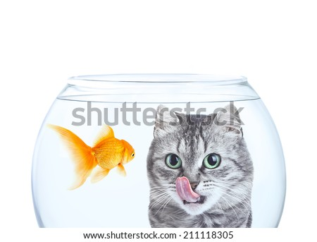 Cat looking on fish in aquarium with a hunger - stock photo
