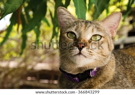 cat looking out cat - stock photo