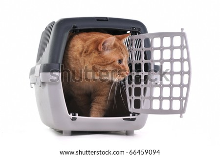 Cat looking out cautiously of its cage - stock photo
