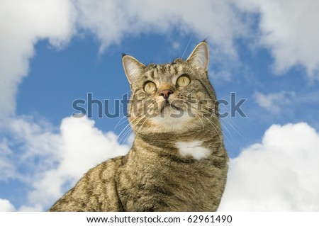 Cat looking out, mouse shape sky in background - stock photo