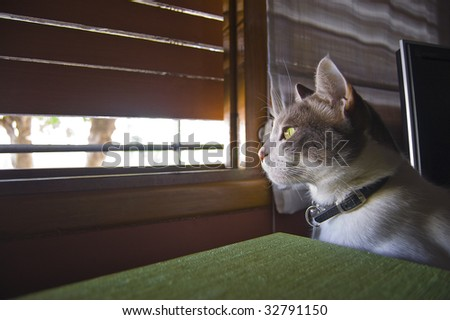 Cat looking out through a semi open window - stock photo
