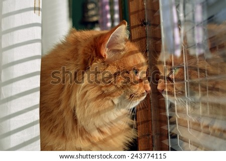 Cat looking outside through window