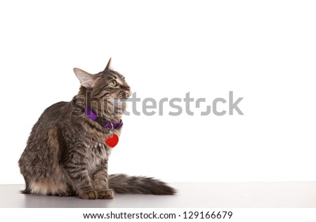 Cat looking towards white space - easy to expand for use. - stock photo