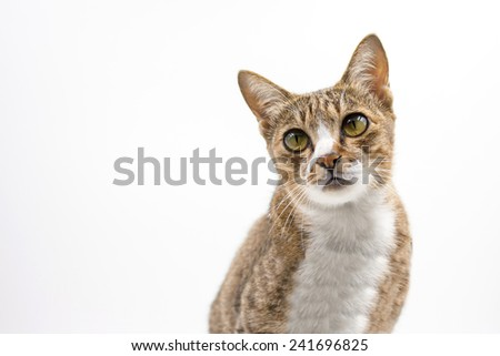Cat looking up on white background.